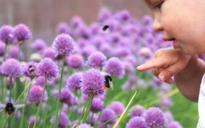 Alergia a abejas y avispas
