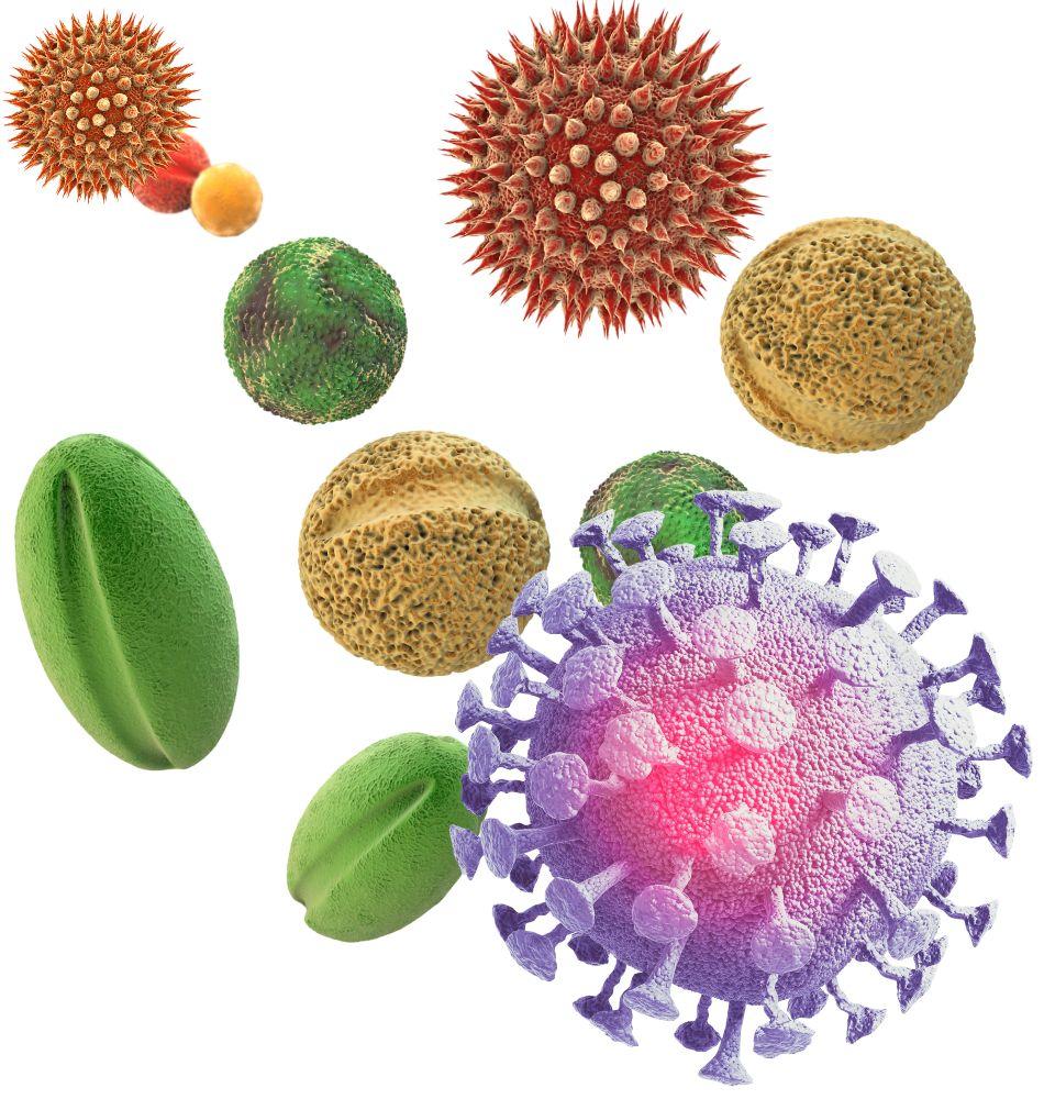 COVID-19 y alergias Clínica Ojeda