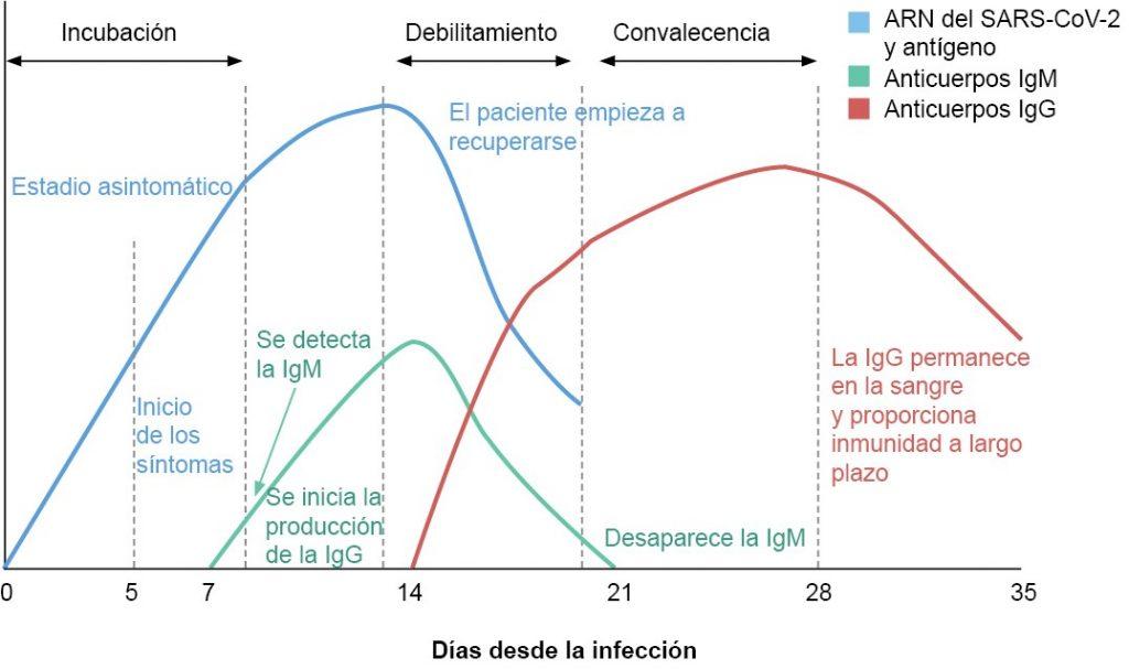 Periodo de positividad de los test rápidos serológicos en relación a la PCR viral